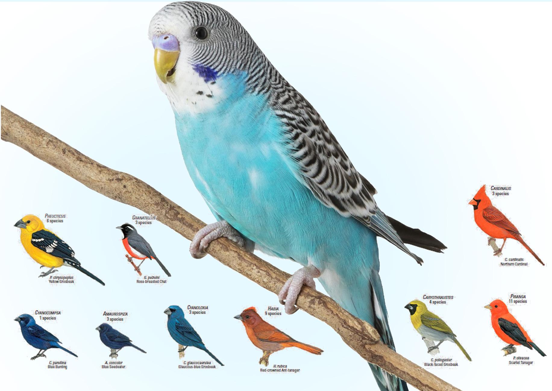 birds as-pets