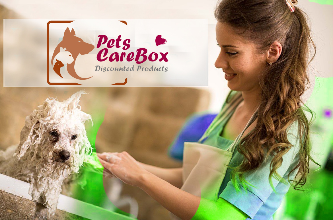 dog-grooming-picture