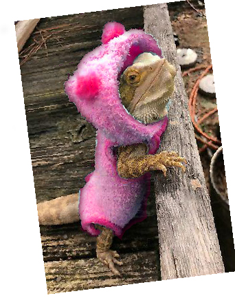 rose-dressed-breaded-dragon-suited-up
