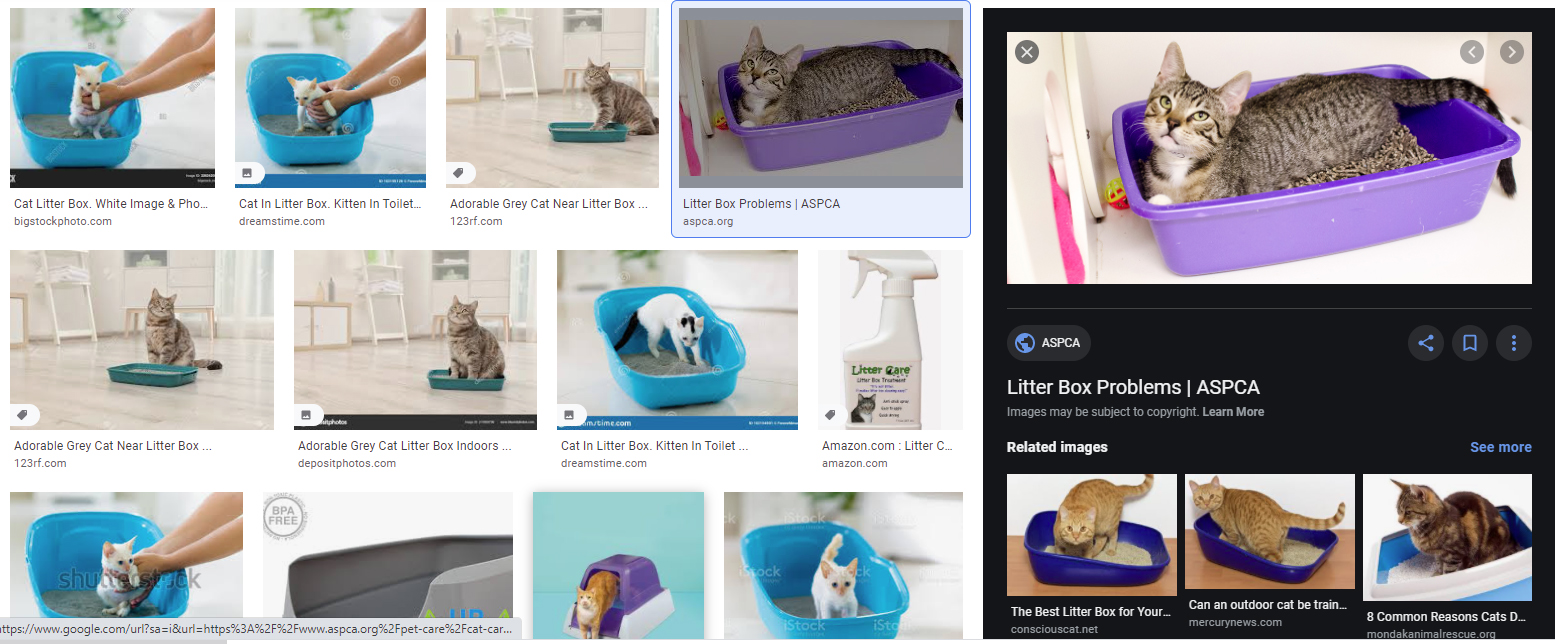 search for pet care litter box
