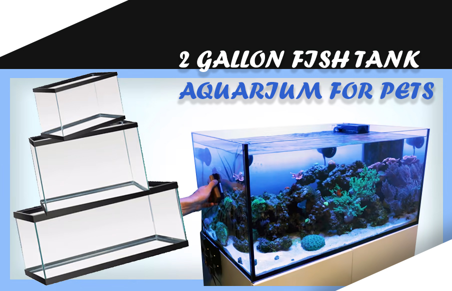 2 GALLON FISH TANK aquarium for pets